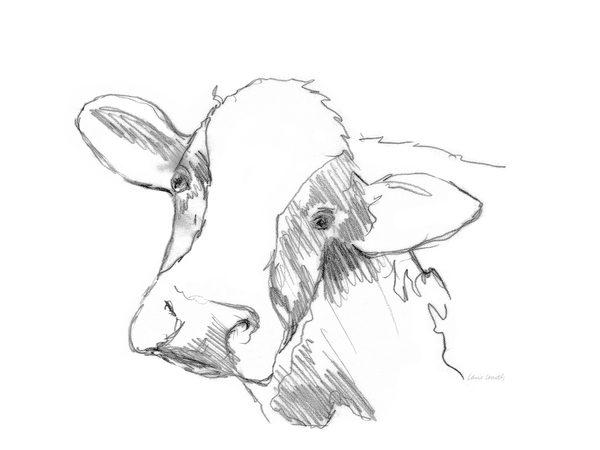 SunDance Graphics | Image Detail - 14522 - Cow Sketch